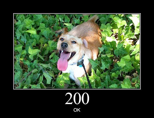 HTTP Status Dogs