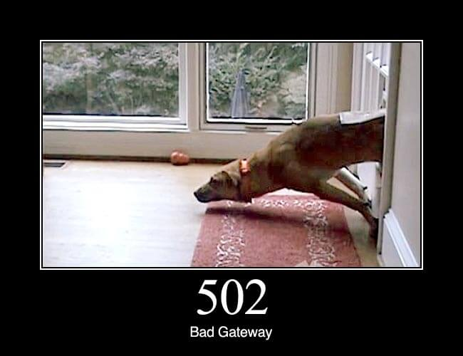 502 bad gateway http status dogs