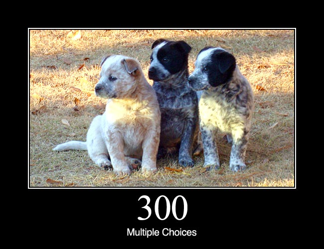 300 Multiple Choices